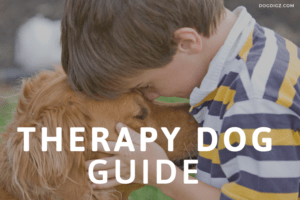 Therapy-Dog-Guide